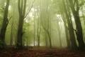 Tajomný les v ...
