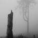 V objatí hmly...