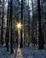 Medzi stromami...