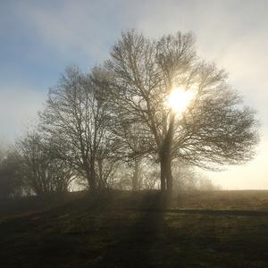Medzi stromami VI...