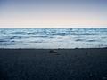 fresh sea