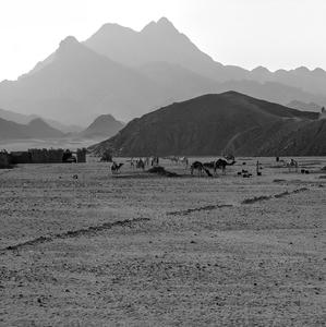 Arabská púšť