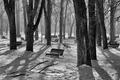 Opustený park