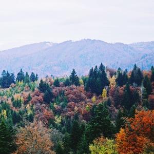 Jesennosť