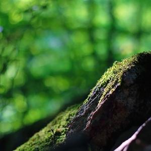 Časť lesa
