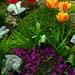 krasna zahradka