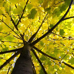 "Nazrel som stromu pod ""sukňu"""