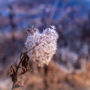 srdce prírody