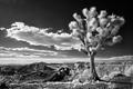 Zima v Arizóne