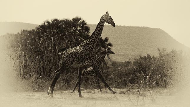 Spomienky na Afriku IX