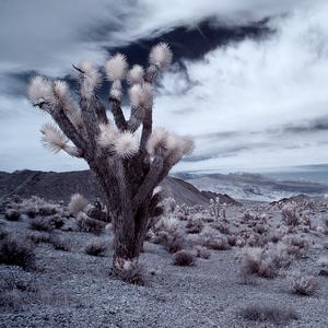 Arizona IR (I)