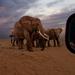 Elephant crossing @ 24mm