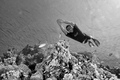 Bear - the freediver / BW