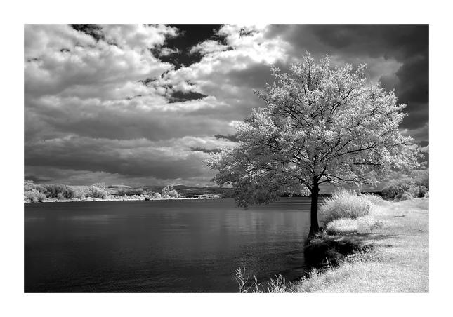 Infračierno-biely strom