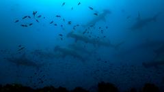 Žraločia polievka