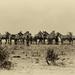 Spomienky na Afriku V