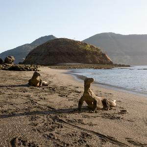 Vegetík na pláži