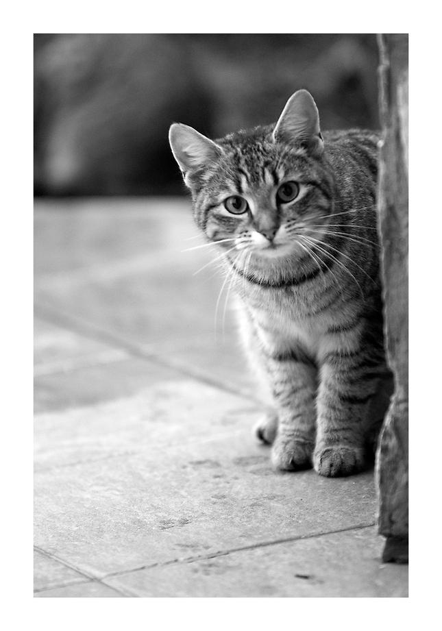 Amatér veľký mačička pics