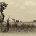 Spomienky na Afriku VI
