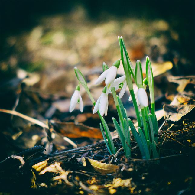 Poslovia jari