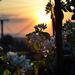 Jar pri západe slnka