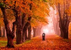 Jesennou alejkou