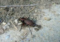 taký malý chrobáčik