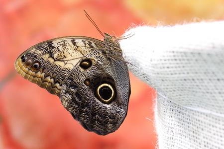 Výstava fotografií: Benátky, Budapešť a motýle