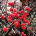 zima v cervenom