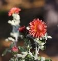 kvety jesene1