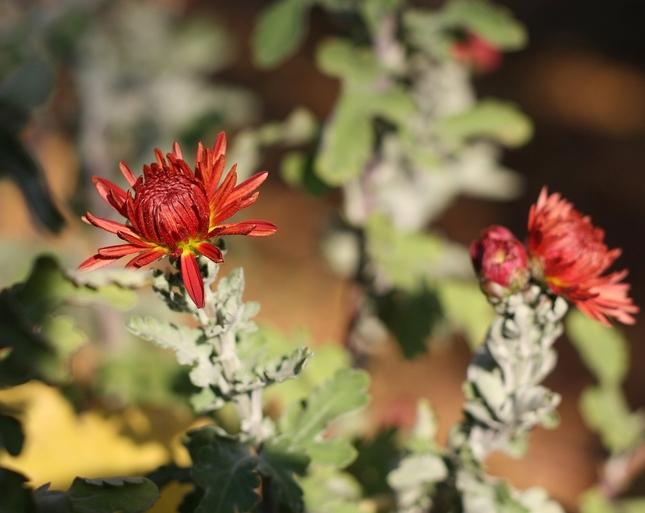 kvety jesene