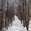 Zima v lese III.