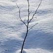 V snehu