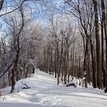 Zima v lese II.