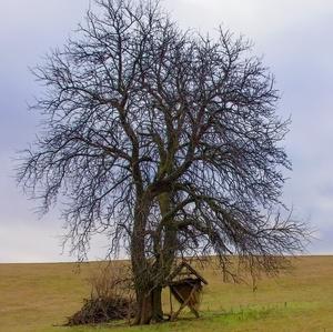 Strom + senník