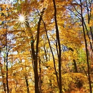 Jesenô a slnečnô
