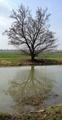 Zrkadlenie strom