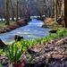 Jarný potok Parná