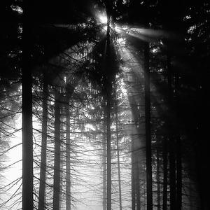 v tajomnom lese..