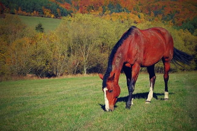koník..