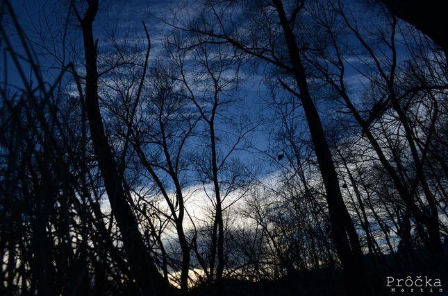 Silueta stromov