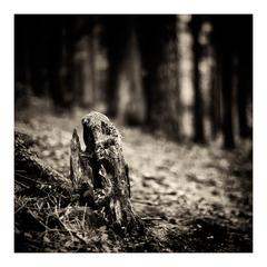 dark forest VI