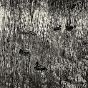 Ukryté kačice