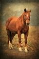 Spomienka na koňa
