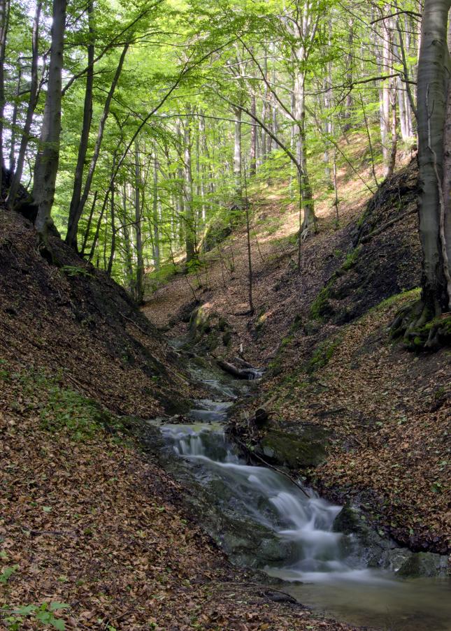 Lačnovský kaňon III