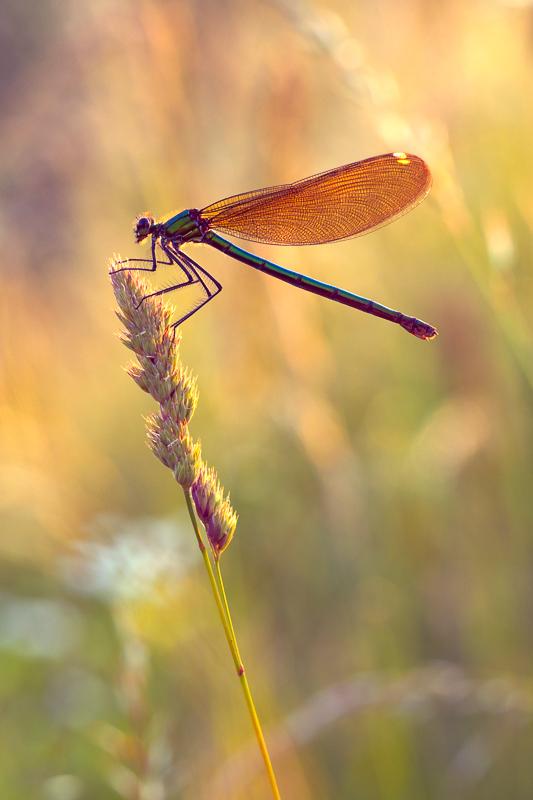 Motýlica vo večernom šate