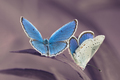 Motýle v modrom