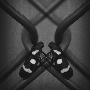 The Dark Twins