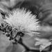 Flower in white
