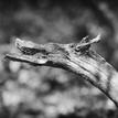 S chrtom v lese